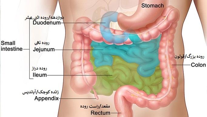 علائم اولیه سرطان های دستگاه گوارش و سرطان روده