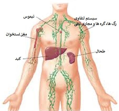 انواع سرطان مغز استخوان: لنفاوی، خون...
