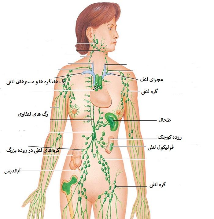 سرطان غدد لنفاوی زیر بغل چیست؟