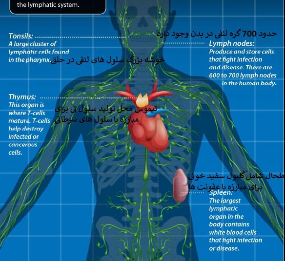 طحال و سیستم ایمنی در سرطان زیر بغل