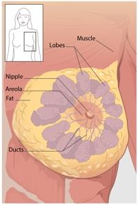 عکس سرطان سینه